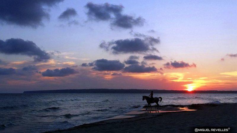 Formentera Playa y Caballo -Miguel Revelles ©